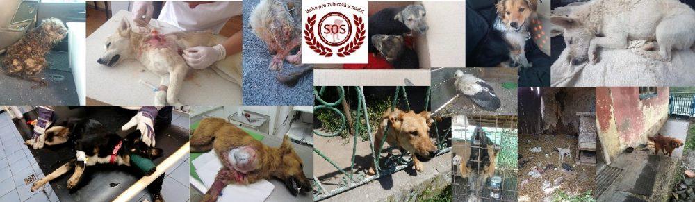 SOS Linka pre zvieratá v núdzi